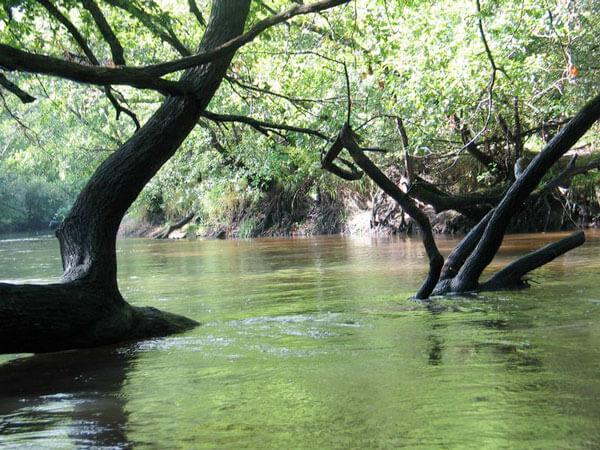 descente de la leyre en canoé kayak mios bordeaux arcachon